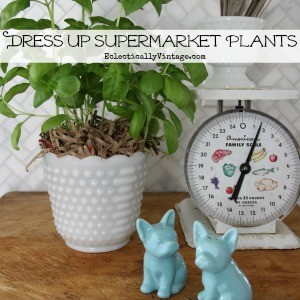 Dress-Up-Supermarket-Plants